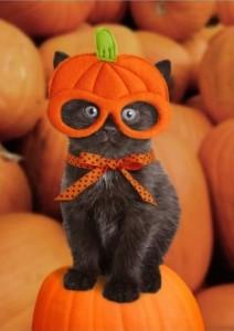 Pumpkin Kitten   Funny Happy Halloween Card